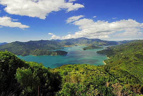 View from Mt. Onahau, Queen Charlotte Track, to Kenepuru Sound, Marlborough Sounds National Park, South Island, New Zealand