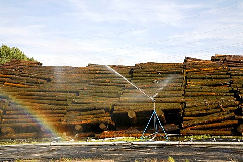 Storage and watering of wooden trunks