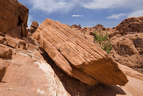 Rock at Mouse's Tank Trail, Mouse's Tank, Petroglyph Canyon, Valley Of Fire State Park, Nevada, USA
