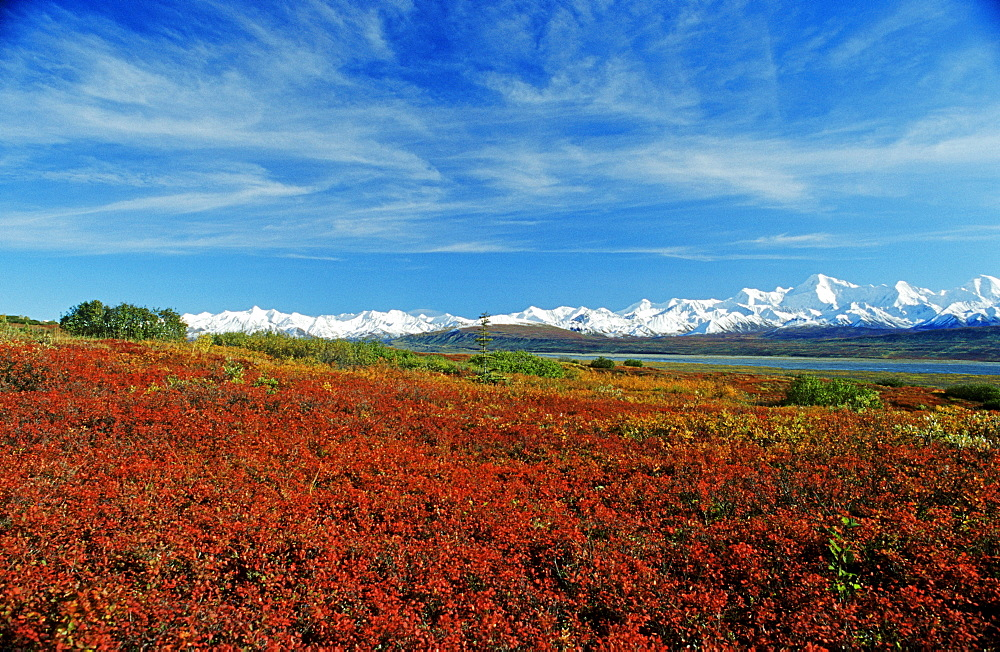 Autumn tundra with the snow-covered peaks of the Alaska Range, Denali National Park, Alaska, USA