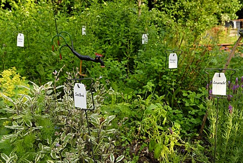 Different kinds of herbs marked by signs in an herb garden