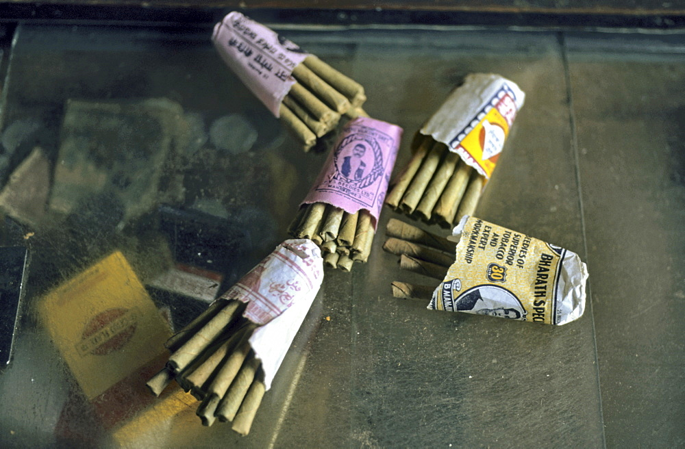 Beedi or Bidi, an Indian smoking product rolled from Tendu or Coromandel Ebony leaves (Diospyros melanoxylon) and filled with tobacco or other herbs, India, Asia