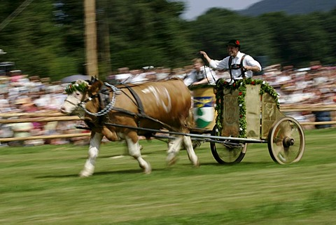 First oxrace of Bichl, August 8th 2004, Upper Bavaria, Germany