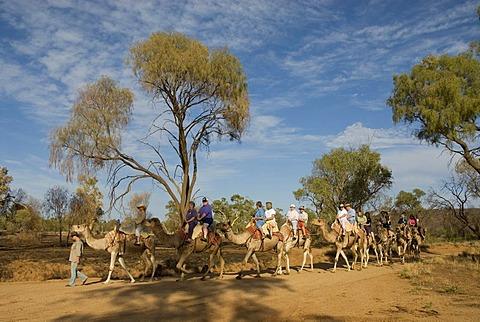 Camel safari, Alice Springs, Northern Territory, Australia