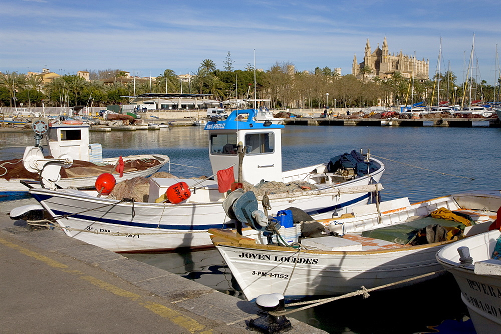 Fishing boats in the harbour and La Seu Cathedral (back), Palma, Majorca, Balearic Islands, Spain