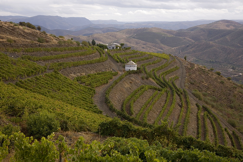 Vineyards of the Oenologist, Rui Madeira, of the CARM and VDS cellars, in the region of the Douro Superior, North Portugal, Portugal, Europe