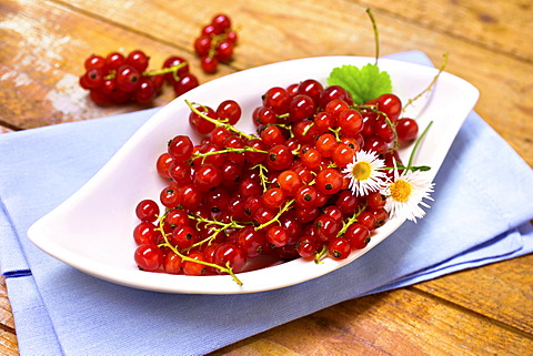 Bowl with red currants and daisies