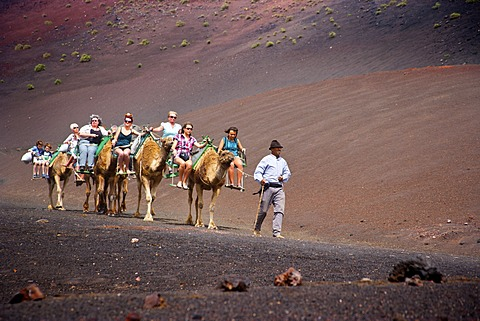 Tourisrs riding on camels in Timanfaya Volcanoe National Park in Lanzarote, Canary Islands, Spain, Europe