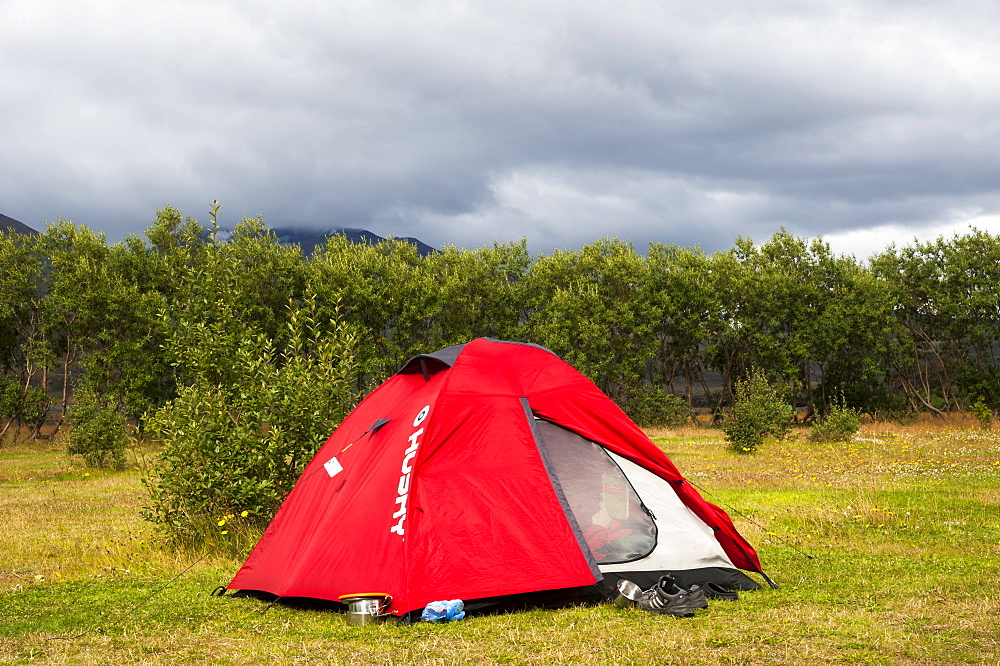 Tent in front of Downy Birch (Betula pubescens), Húsadalur campsite in the valley of Þórsmoerk, Thorsmoerk, Laugavegur hiking trail, Highland, Iceland, Europe