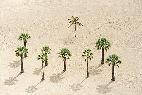 Bird's eye view, palm trees and beach, Playa de las Teresitas, San Andres, Tenerife, Canary Islands, Spain, Europe