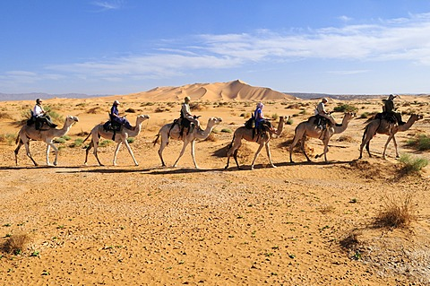 Tourists riding camels in the Adrar Tekemberet plateau, Immidir, Algeria, Sahara, North Africa