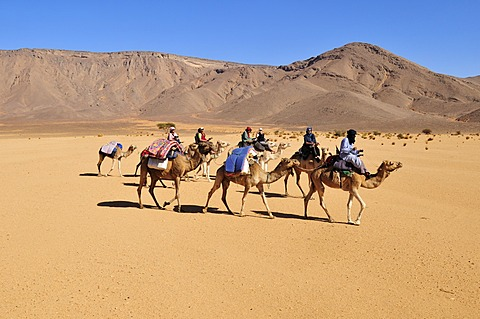 Touareg camel caravan with tourists travelling through low sand dunes of Erg Mehejibad, Immidir, Algeria, Sahara, North Africa