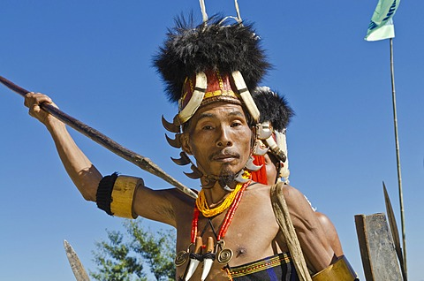 Konyak warrior in full gear at Hornbill Festival, Kohima, India, Asia