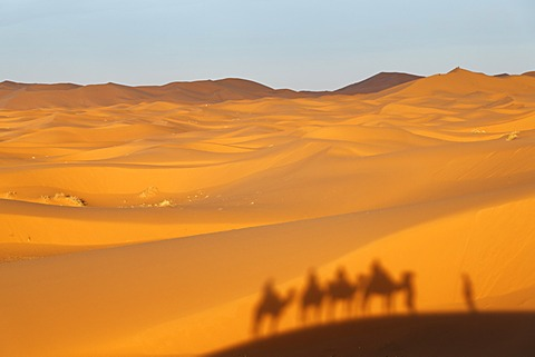 A caravan is casting a shadow on dunes, dromedary camels (Camelus dromedarius), at the sand dunes of Erg Chebbi, Erfoud, Meknes-Tafilalet, Morocco, Maghreb, North Africa, Africa