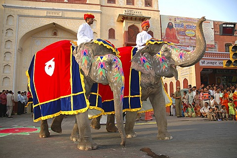 Elephants at the Gangaur Festival, Jaipur, Rajasthan, India