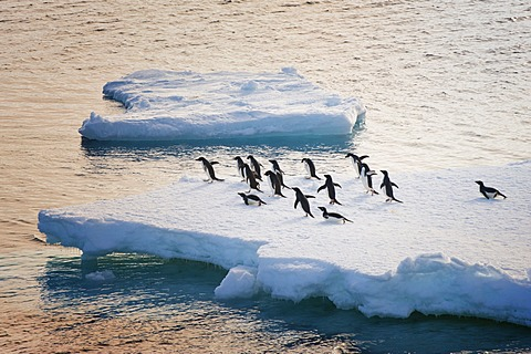 Adelie penguins (Pygoscelis adeliae) on an iceberg, Antarctic Sound, Antarctic Peninsula, Antarctica
