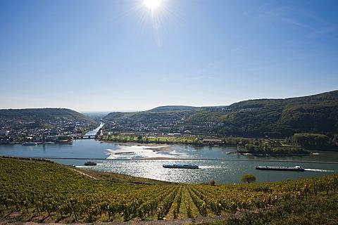 Vineyard, Rheingau, Hesse, Germany, Europe