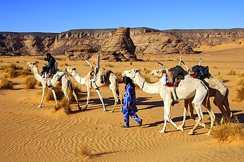 Tuareg nomads with white Mehari riding dromedaries, Acacus Mountains, Libya
