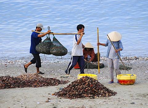 Fisherman carry nets with fish on the beach of Mui Ne, Vietnam, Asia