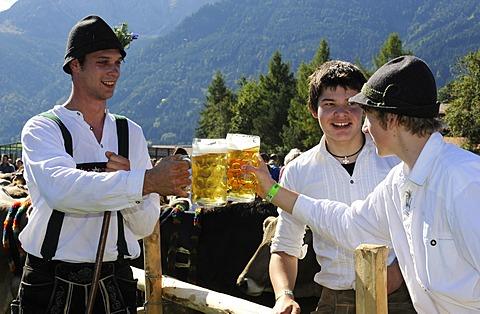 Almabtrieb, cattle drive, Viehscheid, sorting of cattle in Pfronten, Ostallgaeu, Allgaeu, Swabia, Bavaria, Germany, Europe