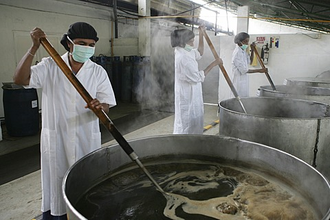 LKA, Sri Lanka : Production of ayurvedic medicine at Hettigoda Industries, the oldes manufacturer of ayurvedic products.