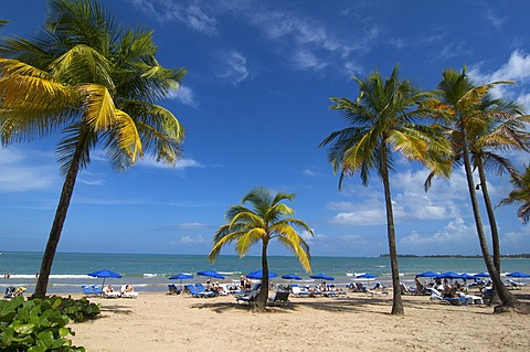 Beach with palm trees in San Juan, Puerto Rico, Caribbean