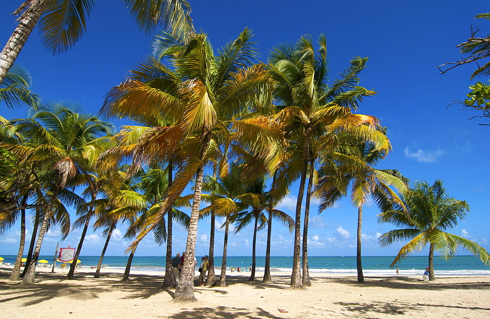 Beach with palm trees, Isla Verde, San Juan, Puerto Rico, Caribbean