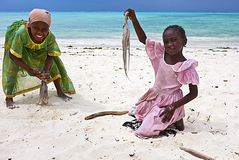 Children beating an octopus with sticks to make it edible, Jambiani, Zanzibar, Tanzania, Africa