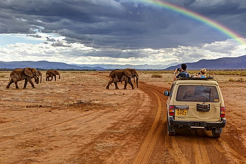 Tourists observing African Bush Elephants (Loxodonta africana) from a jeep, Samburu National Reserve, Kenya, East Africa, Africa, PublicGround