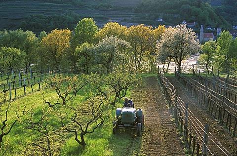 Tractor Wachau Lower Austria
