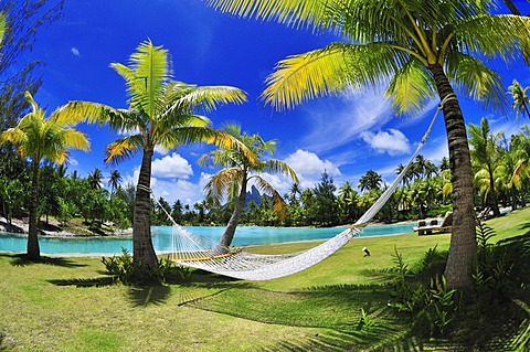 Hammock between palm trees, St. Regis Bora Bora Resort, Bora Bora, Leeward Islands, Society Islands, French Polynesia, Pacific Ocean