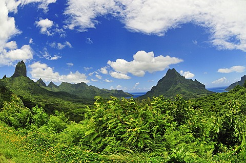 View from Belvedere, Cook's Bay, Opunohu Bay, Moorea, Windward Islands, Society Islands, French Polynesia, Pacific Ocean