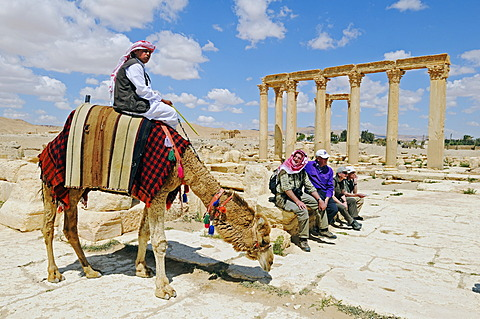 Camel guide and tourists in the ruins of the Palmyra archeological site, Tadmur, Syria, Asia