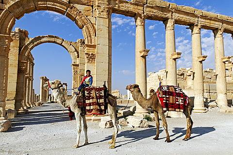 Boy with camels in front of the ruins of the Palmyra archeological site, Tadmur, Syria, Asia