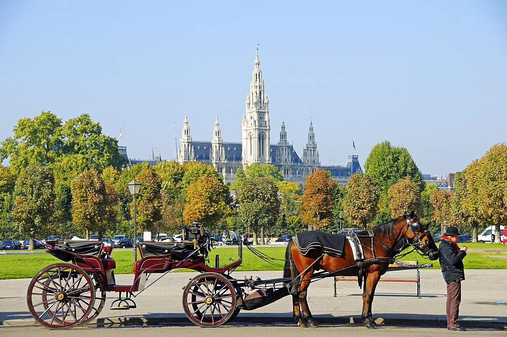 Fiaker, horse-drawn carriage with a driver in front of Vienna City Hall, Vienna, Austria, Europe