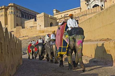 Painted elephants and mahouts, Amber Fort, Jaipur, Rajasthan, India, Asia