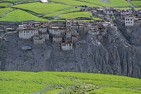 Photaksar village and fields, Zanskar, Ladakh, Indian Himalayas, Jammu and Kashmir, northern India, India, Asia