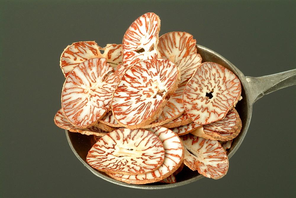 Betel Nuts, Pinang Nuts (Areca catechu), medicinal plant, spice