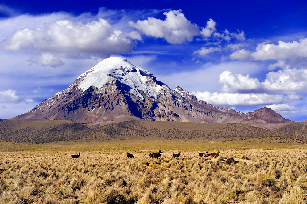 Sajama, Bolivia's highest mountain with plateau, Sajama National Park, La Paz, Bolivia, South America