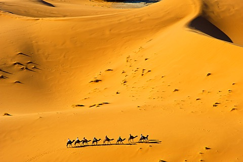 Tourists riding camels through the sand dunes of Erg Chebbi, Sahara, Southern Morocco, Morocco, Africa