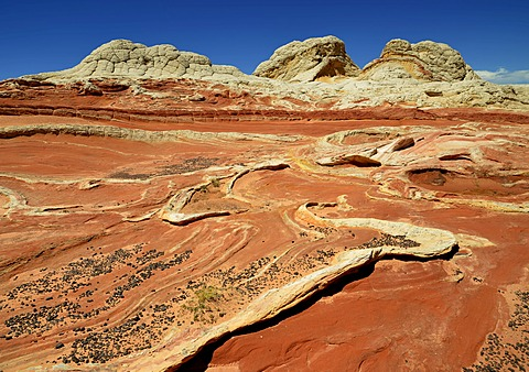 Brain Rocks at White Pocket, eroded Navajo sandstone rocks with Liesegang bands or Liesegang rings, Pareah Paria Plateau, Vermillion Cliffs National Monument, Arizona, Utah, Southwestern USA, USA