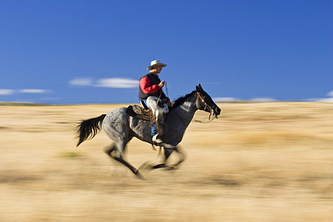 Cowboy gallopping, Oregon, USA