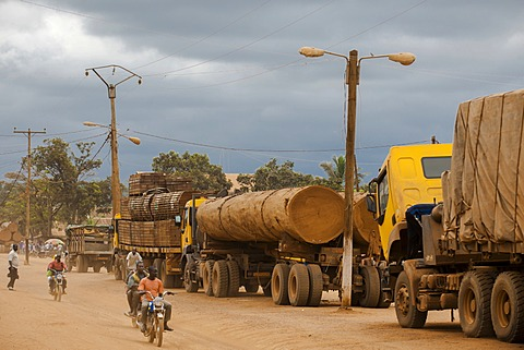 Trucks loaded with tropical timber from Congo on the main road, Yokadouma, East Region, Cameroon, Africa - 832-378101