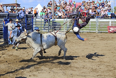 Rodeo, bull riding, Valleyfield, Quebec Province, Canada, North America