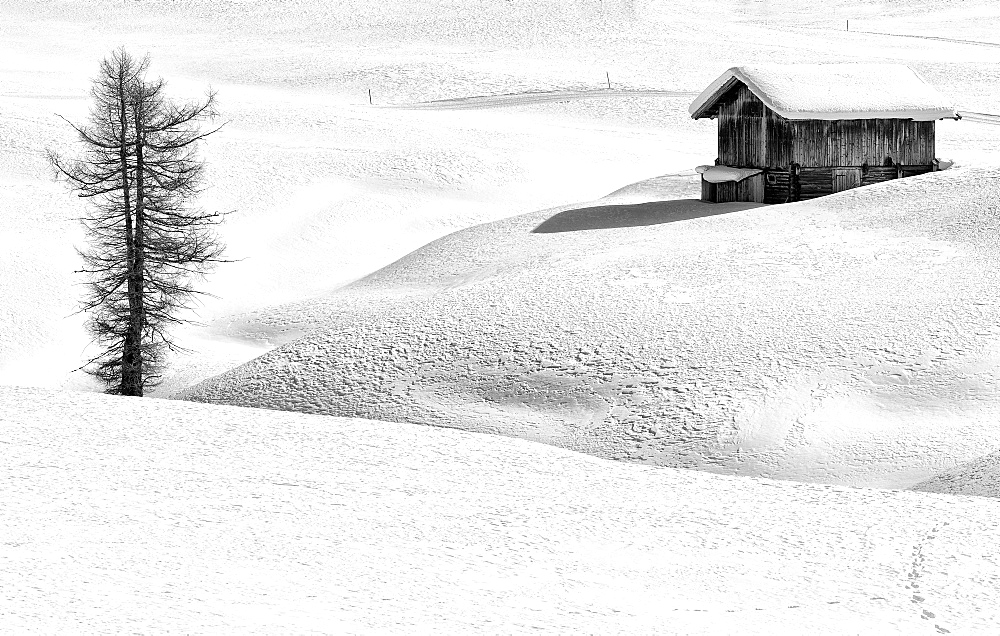 Black and white image of a winter landscape with a wooden hut and a conifer, Seiser Alm, Dolomites, South Tyrol, Italy, Europe
