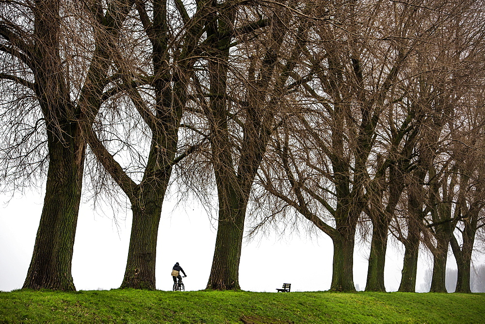 Cyclist, dreary winter weather, fog, bare trees, Rheindamm, bei Stockum, DŸsseldorf, North Rhine-Westphalia, Germany, Europe