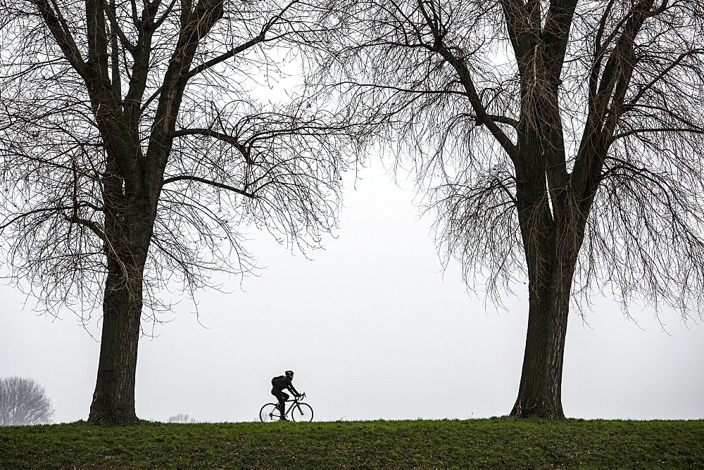 Cyclist, dreary winter weather, fog, bare trees, bei Stockum, DŸsseldorf, North Rhine-Westphalia, Germany, Europe