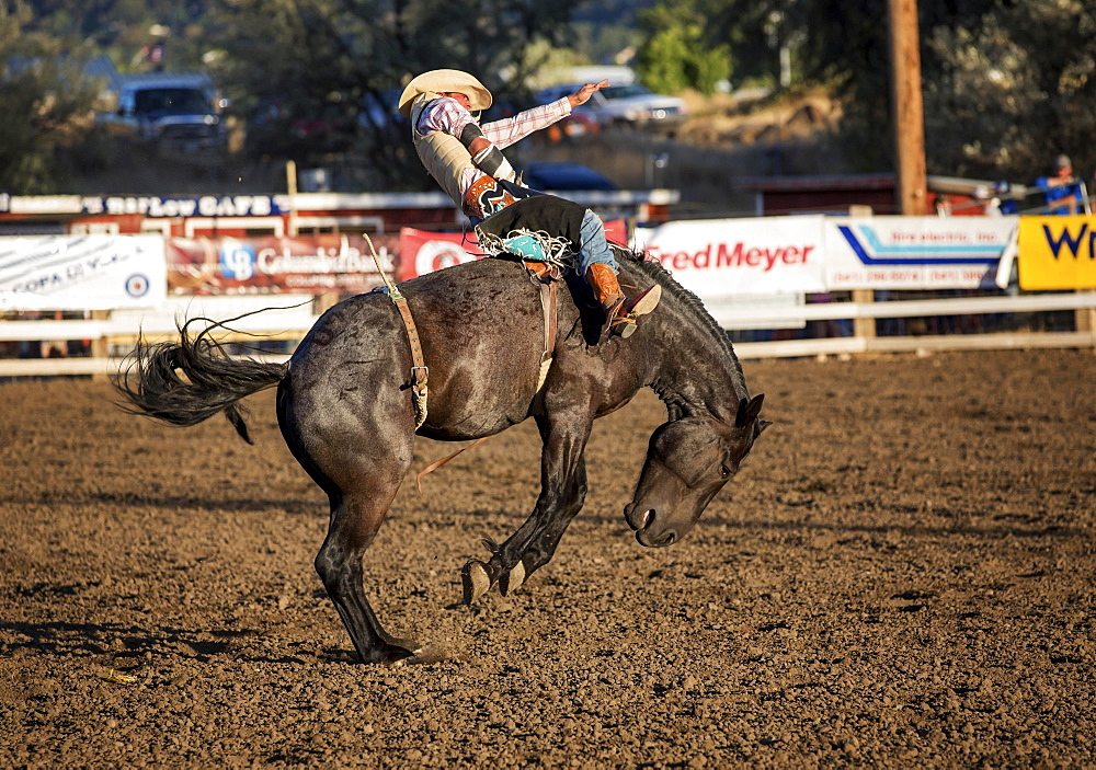 Bareback bronc competition, Philomath Rodeo, Philomath, Oregon, USA, North America