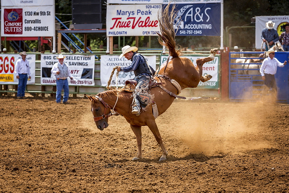 Saddle bronc riding, competition, Philomath Rodeo, Philomath, Oregon, USA, North America - 832-379595