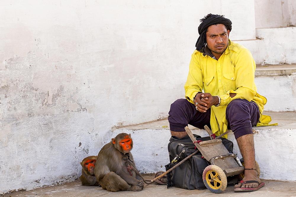 A man with his painted rhesus macaque (Macaca mulatta) monkeys waiting, Pushkar, Rajasthan, India, Asia